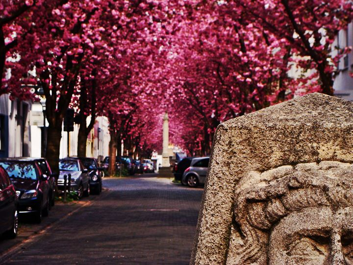 Bonn-street-in-Germany-Mind-blowing-places-of-the-world-5