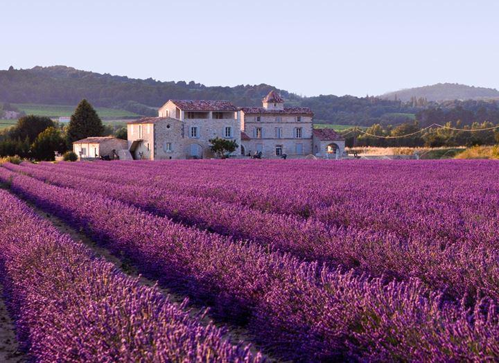 France_Lavender_Field