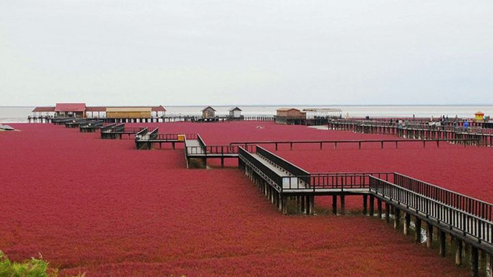 Red-Beach-Panjin-China5