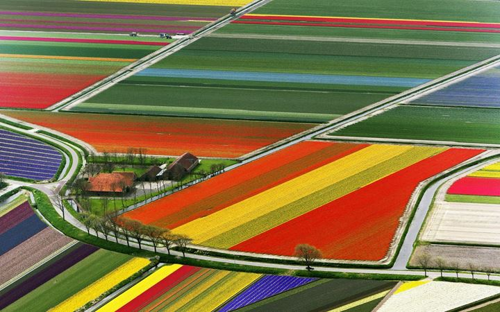 aerial-view-of-tulip-flower-fields-amsterdam-the-netherlands2