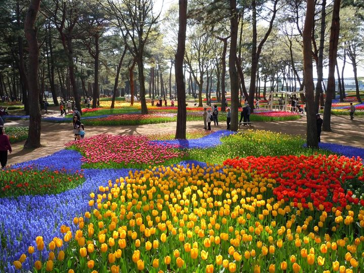 hitachi-seaside-park-tulips-02