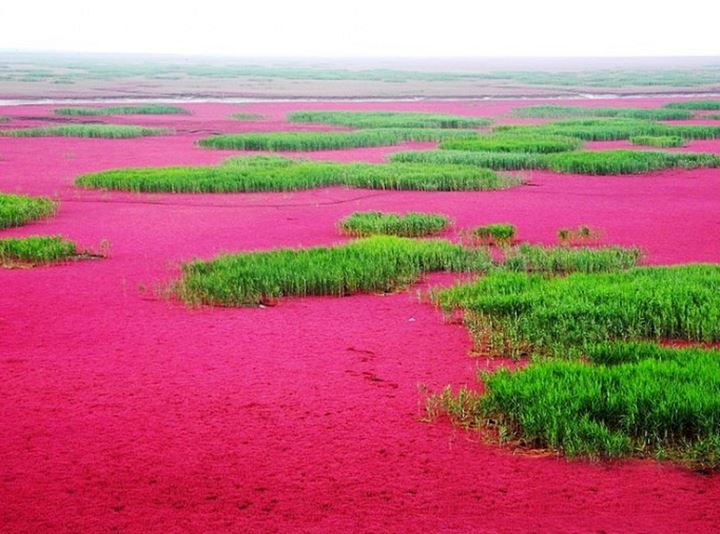 panjin-red-beach-31