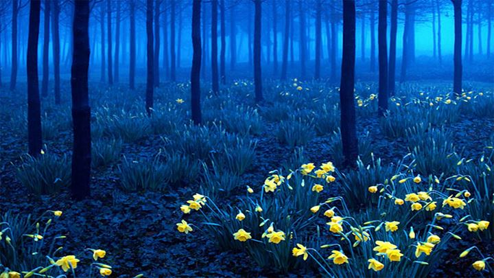 piccit_black_forest_germany_591554554