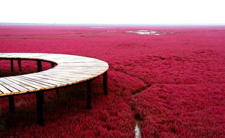 日本海滨公园  hitachi seaside park, japan 中国盘锦红海滩  red