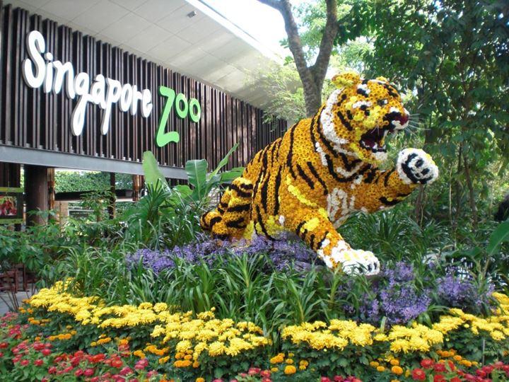 新加坡动物园 singapore zoo