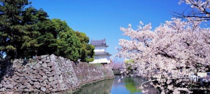 2017日本全國櫻花預測