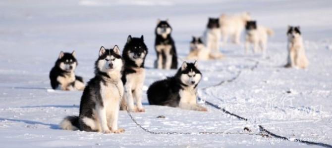 跟著動物去旅行!6個推薦地點,讓你與動物有近距離的接觸