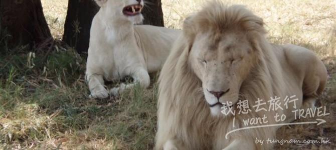 女子遊南非獅子園, 開窗拍照遭獅子咬死!!