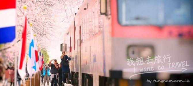 韓國浪漫鐵道賞櫻一天團 HKD399